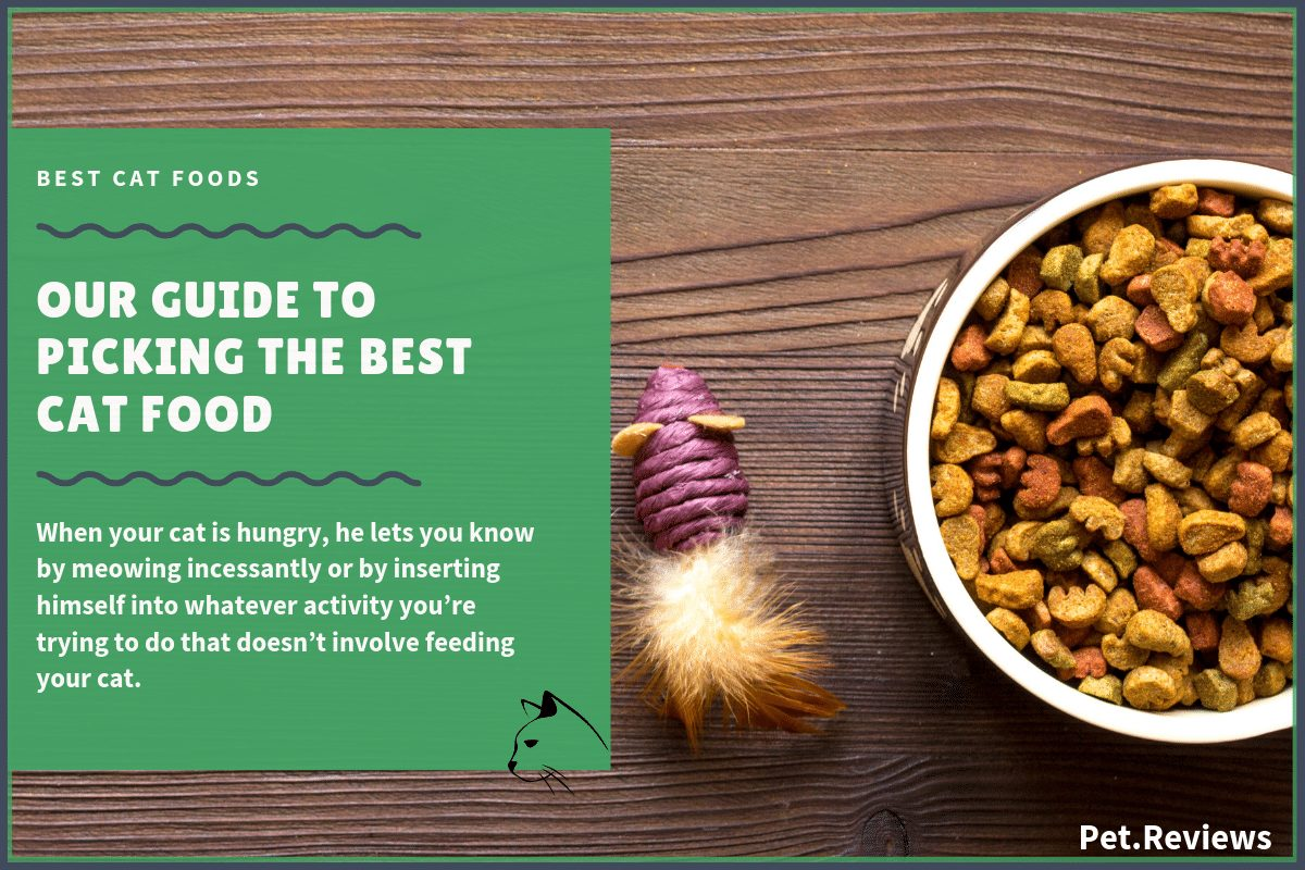 Best Cat Food: Our 2019 Top Rated Healthiest Cat Food Picks