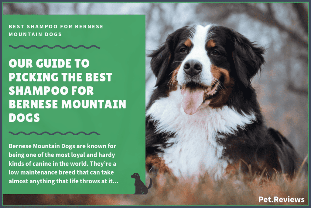 best bernese mountain dog shampoo