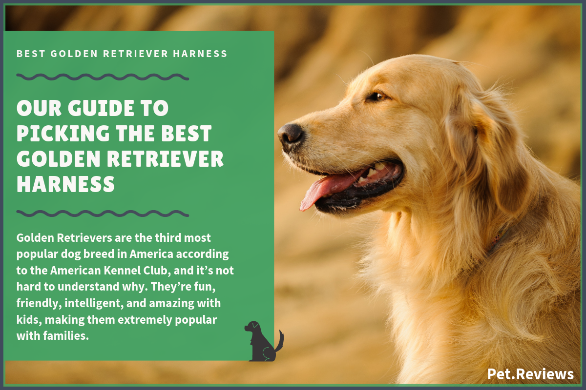 best golden retriever harness