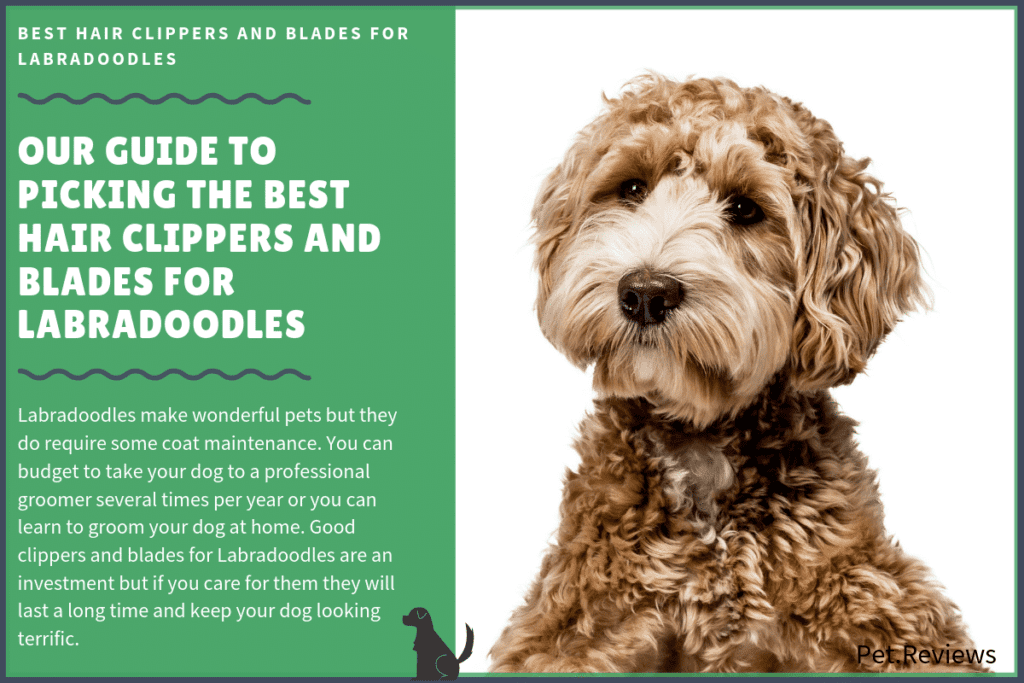 best hair clippers for labradoodles