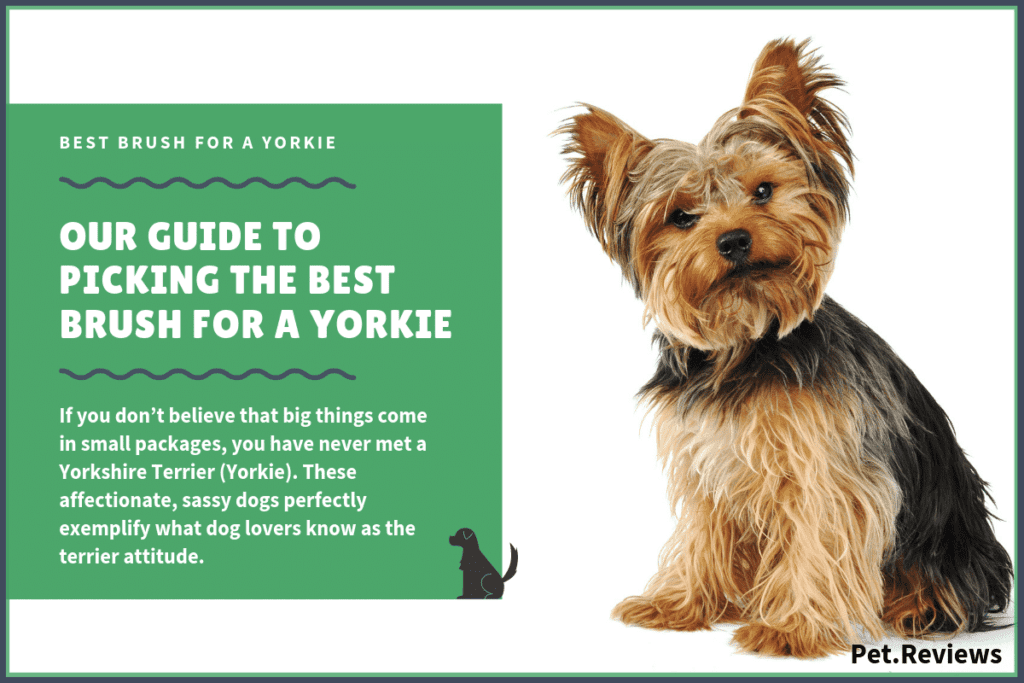 best brush for a yorkie