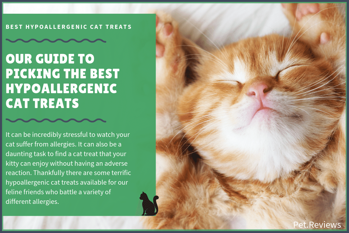 best hypoallergenic cat treats